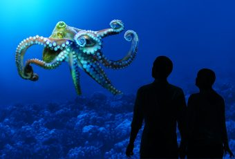 OctopusPeople_MBA