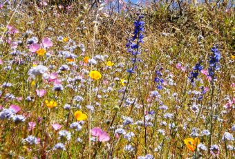 MPRPD - Wildflowers on Terrace Trail - Garland Park