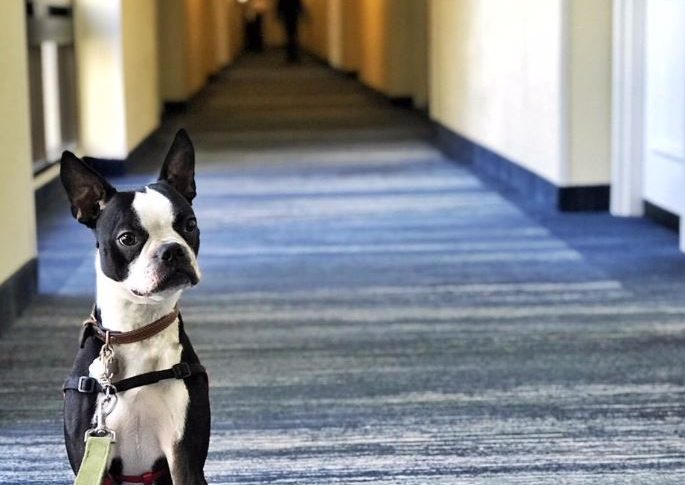 Pet Friendly Hotel in Hallway