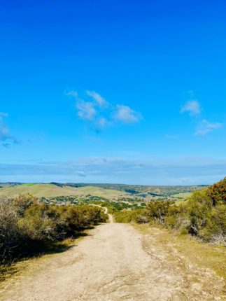 Top 5 Hikes in Monterey County- Toro County Park
