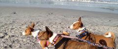 Pet Friendly Monterey Bay, Traveling with Pets has Never Been Easier